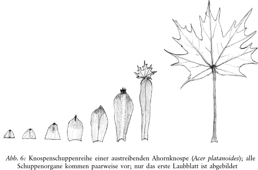 Bonn 1938 braun b dissertation